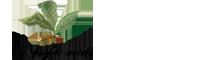 El fogón verde | Restaurante